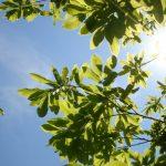 sl_jyutaku_procucts_solar01
